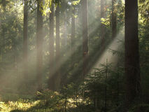 放光森林ib光 免版税图库摄影