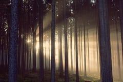 放光通过剪影树的太阳光芒风景看法  库存照片