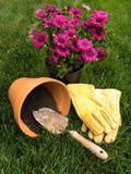 放再盆中的雏菊植物到赤土陶器罐里 免版税库存图片