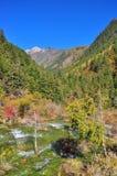 放出与树的水在背景 免版税库存照片