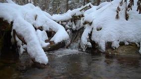 放出与雪和冰在冬天森林 股票视频