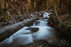 放出瀑布在森林里 免版税库存图片