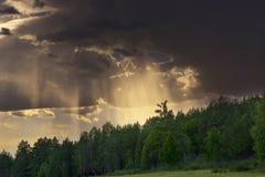 放出通过低剧烈的云彩的光束,突出森林 免版税库存照片