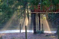 放出通过清早薄雾的太阳在常青树附近 库存图片