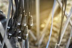 放大器的信号电缆 免版税图库摄影