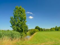 放弃与沿一个领域的芦苇与树在Kalkense Meersen自然保护,富兰德,比利时的清楚的蓝天下 免版税库存图片