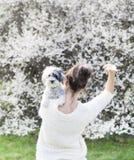 放弃和拥抱她的白色狮子狗的后面的妇女在春天庭院里 免版税库存图片