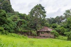 放弃在家在Ubud密林,巴厘岛 图库摄影