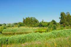 放弃在Kalkense Meersen自然reerve,富兰德,比利时的沼泽地风景树 库存图片