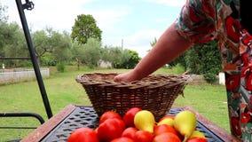 放新近地被收获的蔬菜和水果的女性花匠入篮子 影视素材