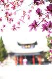 绽放木兰春天结构树 免版税库存图片