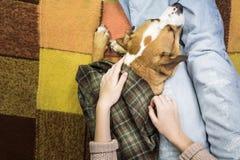 放松与狗 免版税库存照片