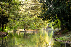 放松和日落在公园 免版税库存图片