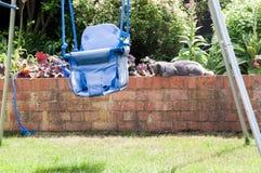 放松在一个晴朗的下午的庭院里的猫 免版税库存图片