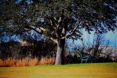 放松在一棵大美丽的树下 库存图片