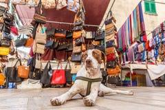放松在五颜六色的市场上的狗在Alcudia 库存照片