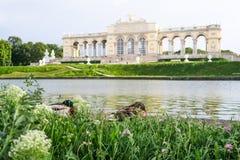放松在克莱茵Gloriette前面的两只可爱的鸭子在Schön 图库摄影