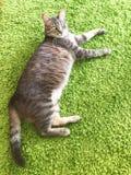 放松在地毯的虎斑猫 免版税库存图片