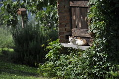 放松在庭院里的猫 免版税库存照片