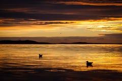 放松在日落的海鸥 免版税库存照片
