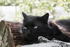 放松在木日志的庭院里的厚实的长的头发黑色尚蒂伊蒂凡尼猫画象  关闭肥胖雄猫 库存照片