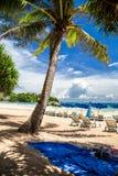 放松在树荫下在棕榈树下在Kata海滩,泰国 库存图片