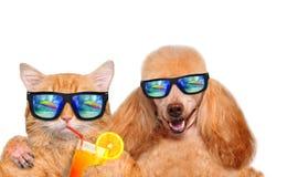 放松在海背景中的猫和狗佩带的太阳镜 免版税库存图片