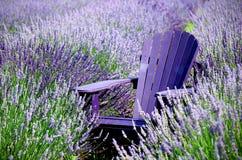 放松在淡紫色 库存图片