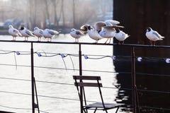 放松在船,友好的战斗栏杆的海鸥  库存图片