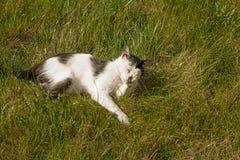 放松在草的一只逗人喜爱的猫在庭院,春天happyness射击了与copyspace 免版税图库摄影