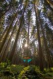 放松在蓝色吊床的白肤金发的女孩入放松和花费的质量时间森林美好的目的地形式德国  库存图片