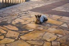 放松在街道上的猫 库存照片