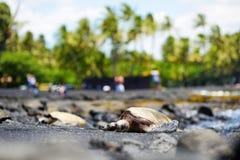 放松在Punaluu的夏威夷绿海龟染黑在夏威夷的大岛的沙子海滩 库存照片