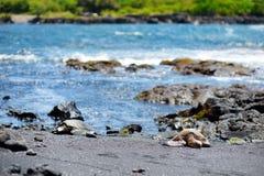 放松在Punaluu的夏威夷绿海龟染黑在夏威夷的大岛的沙子海滩 免版税图库摄影