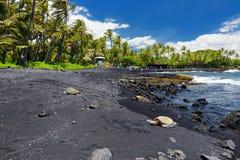 放松在Punaluu的夏威夷绿海龟染黑在夏威夷的大岛的沙子海滩 库存图片