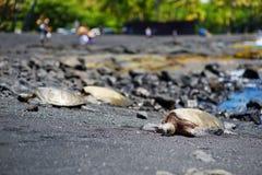 放松在Punaluu的夏威夷绿海龟染黑在夏威夷的大岛的沙子海滩 免版税库存照片