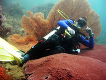 放松珊瑚的潜水员 免版税库存图片