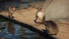 放松由在储备的水池的猴子 股票录像