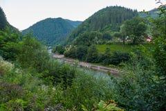 放松的一个理想的地方 树和草,干净的新鲜空气,美好的山风景的绿叶 免版税库存照片