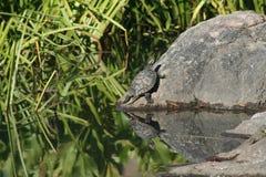 放松的一个晴天在岩石 免版税库存照片