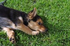 放松的小狗 免版税库存照片