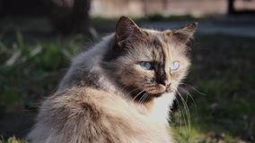 放松的猫户外 影视素材