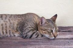放松的猫 免版税库存图片