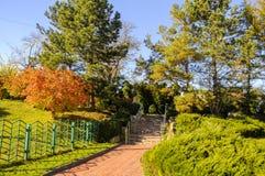 放松的美丽的绿色公园 图库摄影