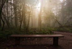 放松的长木凳在有雾的密林 免版税库存照片