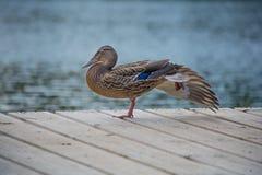 放松的鸟 免版税库存图片