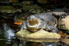 放松的croc 免版税库存图片