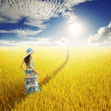 放松黄色米领域和太阳天空的妇女 免版税库存照片