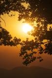 放热与一个橡树和小山的剪影的橙色日落在前景的在背景中 免版税库存图片