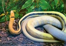 放热的蛇 免版税图库摄影